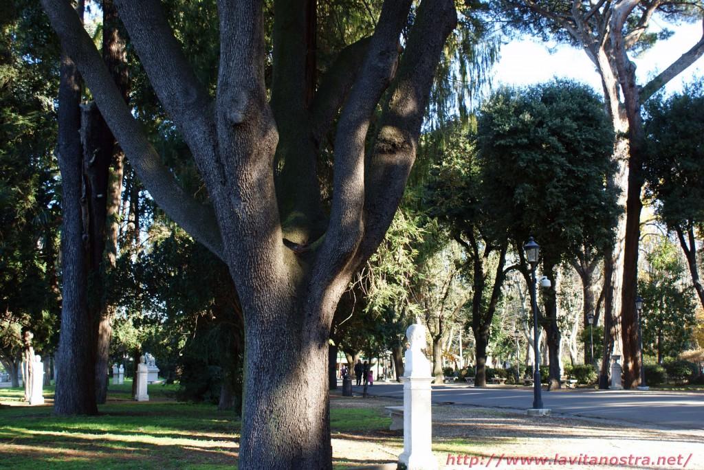 Вилла Медичи парк 7