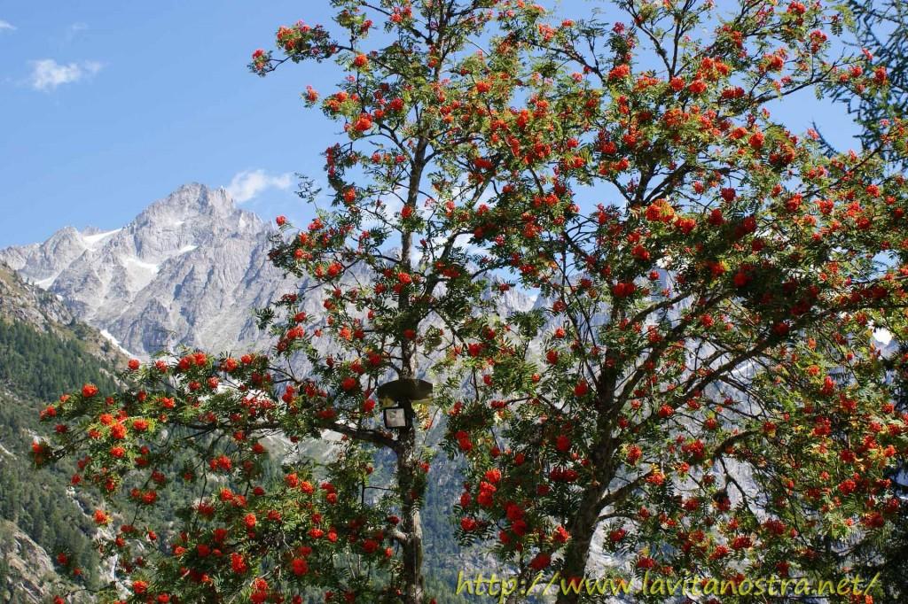 Trentino Alpi-17