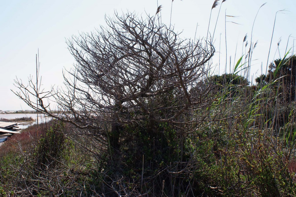 Сардиния растения1