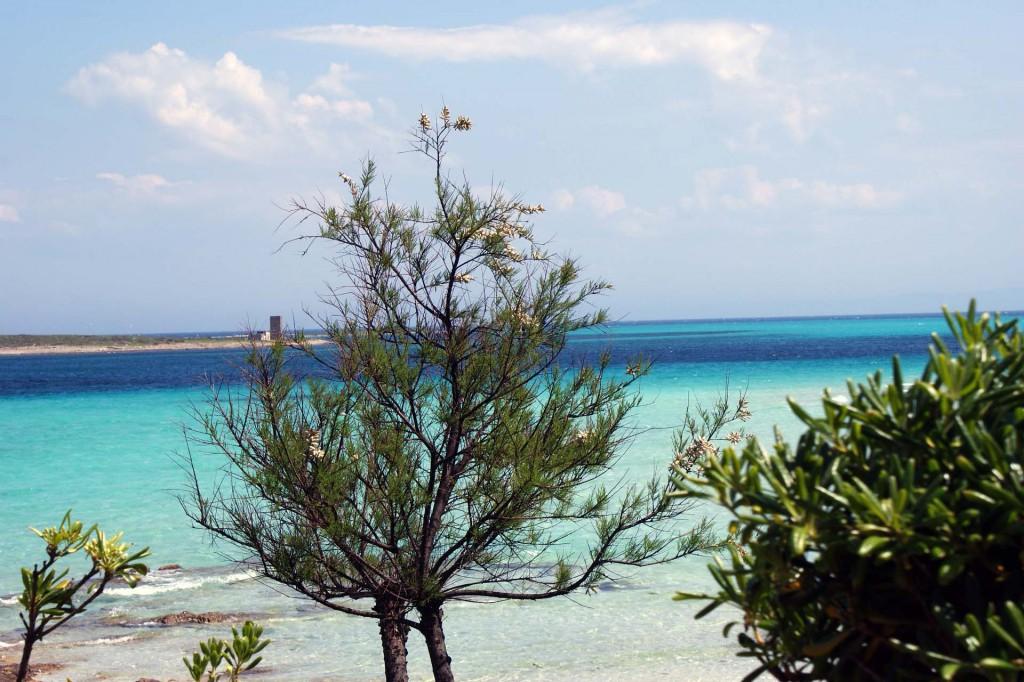 остров Сардиния8