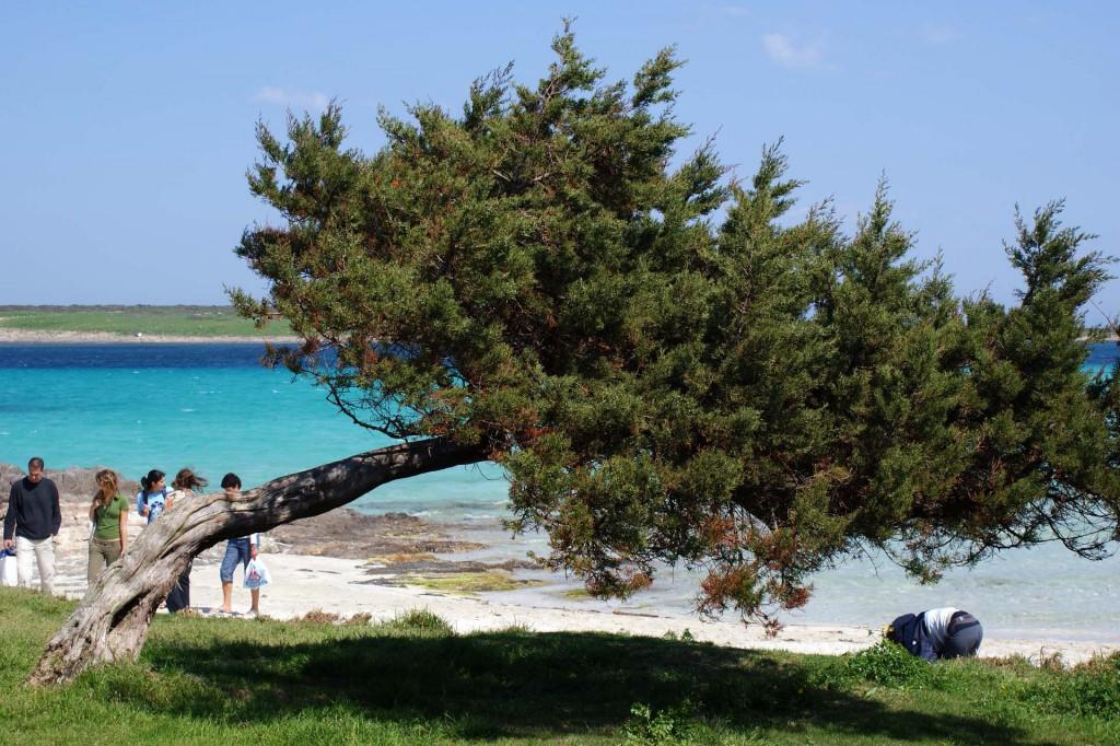 остров Сардиния10