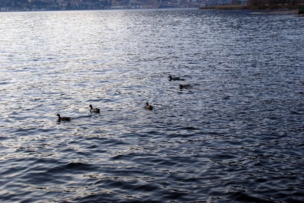 озеро Изео Пизонье 11