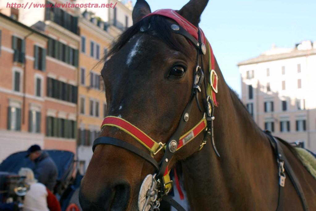 Лошадь на Площади Испании