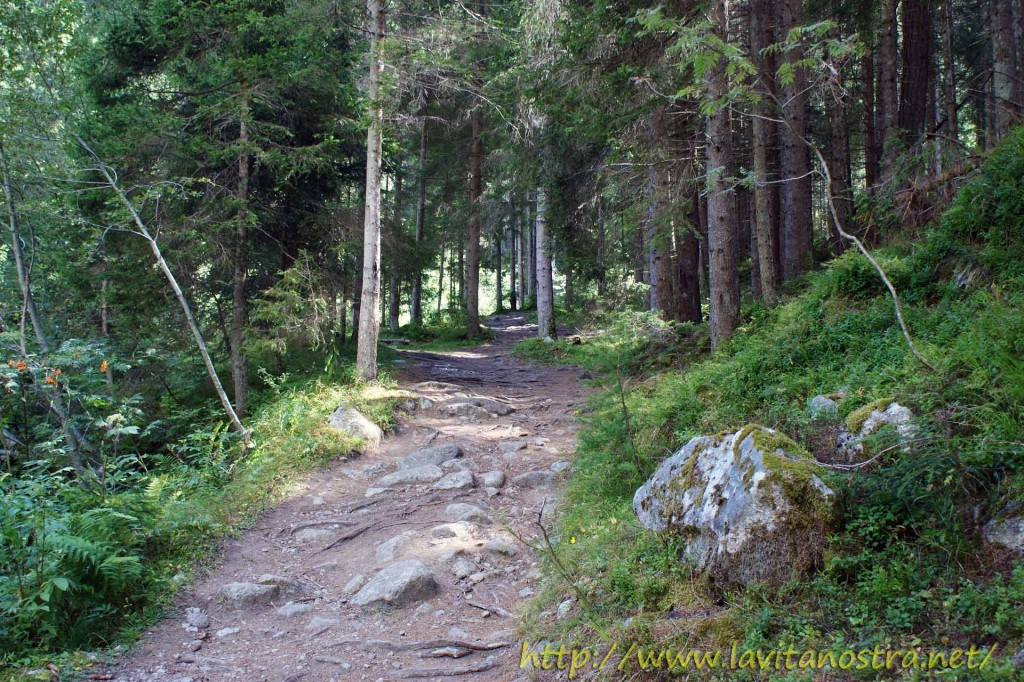 Trentino Alpi-8